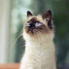 Those blue eyes
