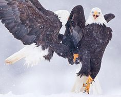 19.) These elegant eagles.