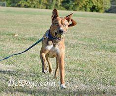 DZ's Adventures: Recall Training Games Hiking Dogs, Training Dogs, Dog Things, Dog Treat Recipes, Pit Bulls, Health And Safety, Dog Treats, Adventure, Games