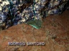 Abertura da novela Suave Veneno (1999) - YouTube