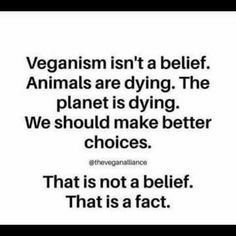 Please don't finance heartbreaking animal cruelty. Know the truth. Please help me save the Animals Vegan Facts, Vegan Memes, Vegan Quotes, Why Vegan, Vegan Vegetarian, Reasons To Be Vegan, How To Become Vegan, Animal Activist, Vegan Animals