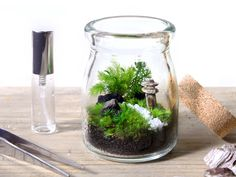 Image result for 苔テラリウム Indoor Bonsai Tree, Plum Wine, Flower Photos, Shadow Box, Miniatures, Diy Crafts, Glass, Flowers, How To Make