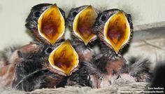 The National Audubon Society's photo. Animals And Pets, Baby Animals, Cute Animals, Thunderbolt And Lightning, Barn Swallow, Audubon Society, Photography Awards, Little Birds, Colorful Birds