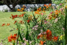 Crocosmia Lucifer, Achillea Millefolium Lilac Beauty and Helenium Moherim Beauty in garden in Madrid Crocosmia Lucifer, Garden Design, Plants, Lilac, Botanical Gardens, Landscape Design, Achillea Millefolium, Garden Photography, Plant Design