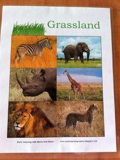 Learning cards about habitats...grasslands, ocean, forest, etc.
