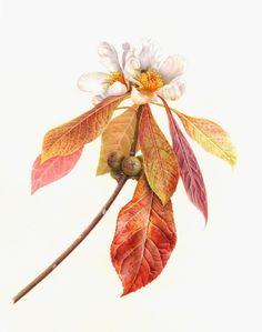 Bartram Stories - Karen Kluglein | American Society of Botanical Artists