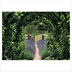 Archway and lavender