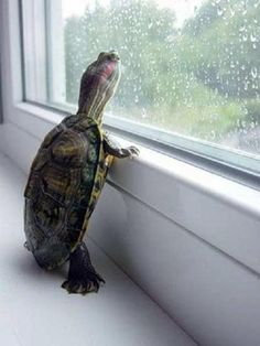aww the wittle turtle :)