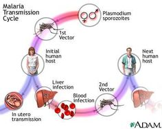 malaria disease an overview Malaria disease can be categorized as uncomplicated or severe (complicated) in general, malaria is a curable disease if diagnosed and treated promptly and correctly hyperreactive malarial splenomegaly (also called tropical splenomegaly syndrome) occurs infrequently and is attributed to.