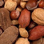 Everything you need to know about nuts