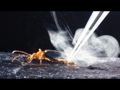 How These 'Exploding Beetles' Don't Blow Themselves up : Animals : Nature World News