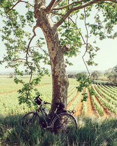 Yeni bir güne merhaba #bisiklet #bisikletsevenler #bisikletliulasim #bisikletliyaşam #bisikletkeyfi #bike #bubisiklet #mersinbisiklet #bisikletturu #manzara #günaydın French Countryside, Farm Life, Life On The Farm, Country Living, Country Life, Country Girls, Country Roads, Sunny Days, Sunny Afternoon