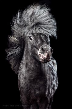 Little Rocker, an Appaloosa pony tossing his salt and pepper mane (by Wiebke Haas) Pretty Horses, Beautiful Horses, Animals Beautiful, Wild Animals Photography, Equine Photography, Wildlife Photography, Horse Photos, Horse Pictures, Pet Photos