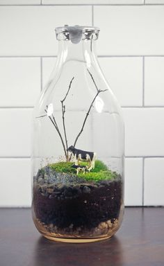 Wondering what you can do with your glass milk bottles that's even more exciting than returning them for the deposit? Upcycle InStyle has 7 sweet reuse ideas including this terrarium.                                                                                           More