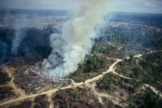 Forest devastation, largest animal extinction in 65,000 years.