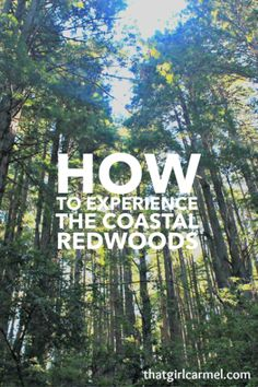 How to make the most of your visit to Redwood National and State Parks in California