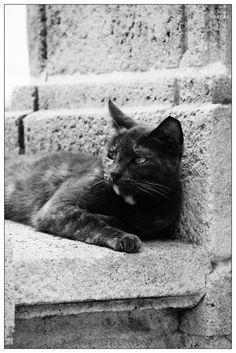 Another homeless feline. :(