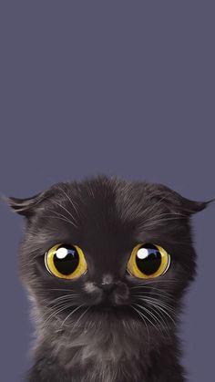 Kitty Cat Wallpaper - Dress Up Your Phone - Chat Tier Wallpaper, Cute Cat Wallpaper, Animal Wallpaper, Iphone Wallpaper, Animals And Pets, Cute Animals, Cat Drawing, Cat Art, Cute Wallpapers