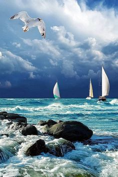 Sailing The Beauty of The Sea