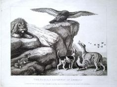 5. Howitt, Samuel 1810 Four original engravings/etchings: Dog, Cock and Fox; Hunted Beaver; The Eagle, & Assembly of Animals; Sheep and Hunted Wolf book
