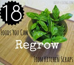 18 Plants You Can Grow from Kitchen Scraps