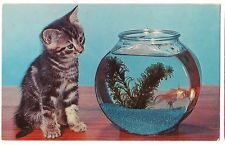 CURIOSITY Tiger Striped Tabby KITTEN Cat GOLDFISH BOWL Vintage POSTCARD