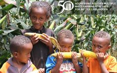 Harnessing maize biodiversity for food security, improved livelihoods in Africa