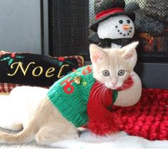 """""""YES.  I'M GOING TO AN UGLY CHRISTMAS SWEATER PARTY - MAINLY BECAUSE THEY HAVE THESE BIG BOWLS OF CATNIP EVERYWHERE FOR THE HOLIDAYS!"""""""
