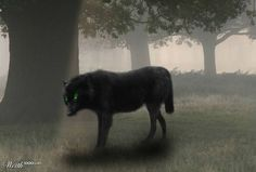 Black Shuck is the name of a ghost dog that roams Norfolk, Suffolk, and other parts of England. It is a large, black canine with flaming red or green eyes, or sometimes just one eye in the middle of its head. Creepy, Scary, Mythological Creatures, Mythical Creatures, Lago Ness, Scariest Monsters, Legendary Monsters, Ghost Dog, Howl At The Moon