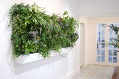"""Jardín Vertical de Interior para """"Riereta"""". Iluminación led y riego automático."""