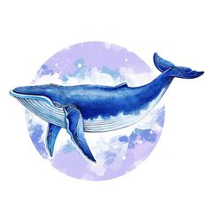 Whale Aquarelle De Baleine And now the Japanese officially resume whaling! Art Inspo, Inspiration Art, Painting & Drawing, Watercolor Paintings, Whale Painting, Animal Drawings, Art Drawings, Blue Whale Drawing, Painting Art