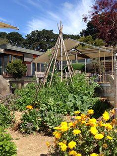 Second veg garden plantings