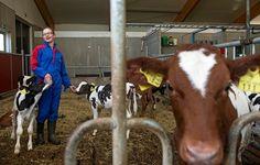 Suomessa tuotetaan maitoa yhtä paljon kuin kulutetaan. Samanaikaisesti Suomeen tuodaan runsaasti maitoa Euroopasta juustoina, rahkoina ja jogurtteina.