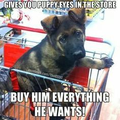 GSD. Yes. But only for dogs... Or other animals. Not kids. LOL