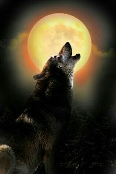 Lone Wolf Howling at a Big Yellow Moon. Wolf Photos, Wolf Pictures, Animal Pictures, Artwork Lobo, Wolf Artwork, Wolf Love, Anime Wolf, Beautiful Wolves, Animals Beautiful