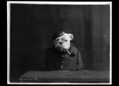 Portraits Of Bulldogs :: vintage pictures of dogs in costume from the early 1900s