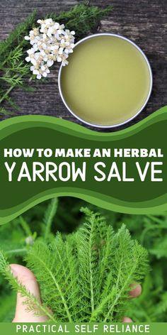 Healing Herbs, Medicinal Plants, Natural Healing, Herbal Tinctures, Herbalism, Natural Home Remedies, Herbal Remedies, Salve Recipes, Herbs For Health