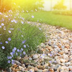 25 Inspiring Dry River Bed Landscaping Ideas in 2019 Landscaping With Rocks, Backyard Landscaping, Landscaping Ideas, Backyard Ideas, Garden Ideas, Backyard Decorations, Pool Ideas, Patio Ideas, Rain Garden