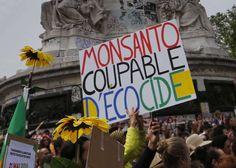 """""""Bayer, qui fait à la fois dans la chimie et la pharmacie - il est l'inventeur de l'aspirine -, est devenu un champion des pesticides. Un secteur dans lequel Monsanto est lui aussi présent, notamment avec son célèbre herbicide Roundup. Mais la grande spécialité du groupe américain, ce sont les semences OGM, dont il contrôle 30% du marché mondial. D'où la logique de cette fusion : dans leur avenir rêvé, Bayer et Monsanto fourniront aux agriculteurs leurs graines de maïs, blé et soja, puis…"""