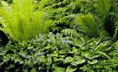 Der Schatten blüht auf -  Im Schatten wächst nichts? Von wegen! Es gibt überraschend viele Möglichkeiten in schattigen Gartenecken ein traumhaftes Schattenbeet zu gestalten.