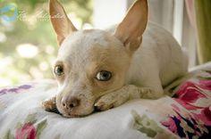 Ká Salcides Fotografia : Eventos : Ensaio Externo : Pets : Famílias :: Frida Kahlo {Cнιнυαнυα}