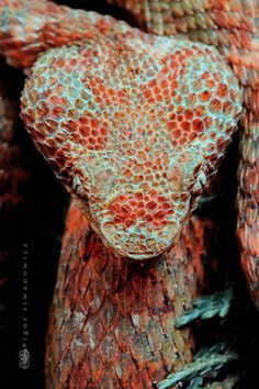 eyelash viper Get Informed with Worthy Readings. http://www.dailynewsmag.com