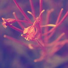 Pari hassua kukkaa :)