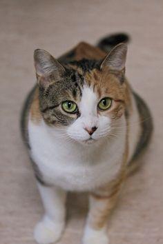 15 Mid Hudson Animal Aid Beacon Ny Ideas Cat Sanctuary Animals Cats