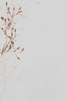 Dried floral background natural design space | free image by rawpixel.com / sasi Beauty Iphone Wallpaper, Floral Wallpaper Phone, Gold Wallpaper Background, Vintage Flowers Wallpaper, Phone Wallpaper Images, Framed Wallpaper, Background Vintage, Nature Wallpaper, Background Images