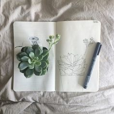 pale, plants, and art image
