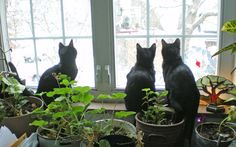 From the Archives: Birdwatchers in Training, 2007