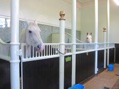 Horses at the Royal Mews