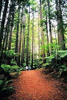 Hikes & Trails - Humboldt Redwoods SP, Ave. Giants/Garberville/Benbow, Humboldt County, California