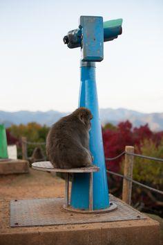 Monkey Park Iwatayama in Kyoto Japan